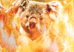 Pray for Australia: Koala bear in flames holding a tree branch and a hand trying to save him. Animals are dying because of the fire.