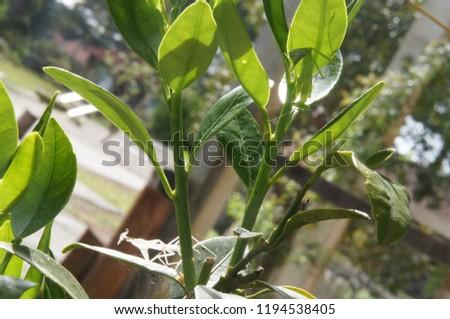 Praying mantis and his exoskeleton  (Mantis religiosa)