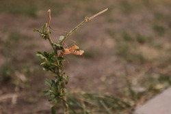 praying mantis in the nature. camouflage praying mantis camouflage insects camouflage animals close up praying mantis closeup praying mantis insects, insect, bug, bugs, animal, animals, wildlife, wild