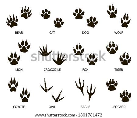 Predator footprint. Wild animals paw prints, cat, bear, tiger, fox and wolf footprints, predators foot marks silhouette  illustration set. Mammal footprint, print animal, danger predator
