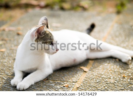 stock photo : Pregnant Cat