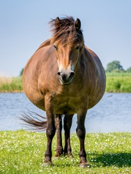 Pregnant horse