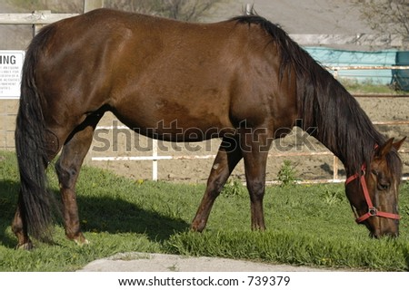 stock photo pregnant mare 739379 Ive watched Enough Hentai to see where this is going