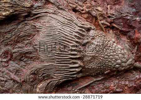 sedimentary rocks and fossils relationship problems