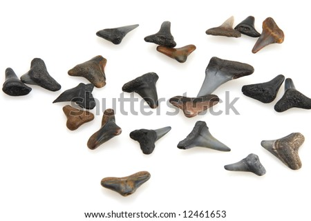 shark teeth rows. shark teeth rows. about