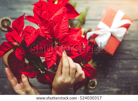 Preparation for Christmas. Woman holding poinsettia flowers. Festive dreamlike mood