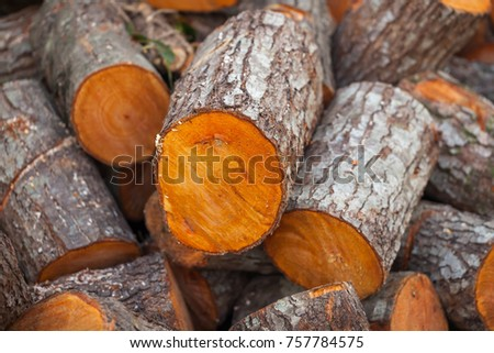 Preparation of firewood for the winter. firewood background, Stacks of firewood in the forest. Pile of firewood. #757784575