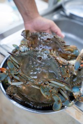 Prepared Blue Crabs From Mediterranean Sea.