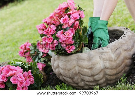 preparing a pot with the soil to plant flowers