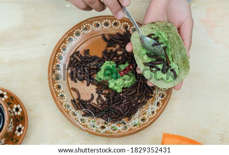 preparing red maguey worm tacos, chinicuil roast, traditional mexican food, chinicuil tacos with guacamole Foto stock ©