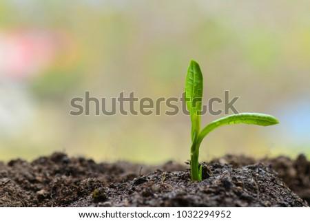 Preserve nature, Go green - Shutterstock ID 1032294952