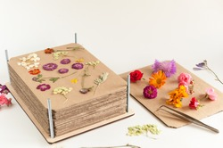 Press for drying flowers with different flowers on a white background