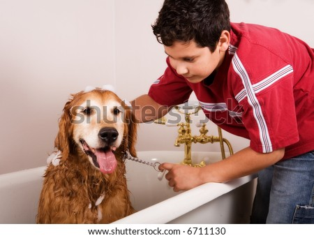 Preteen boy washing his golden retriever in the family bath tub.