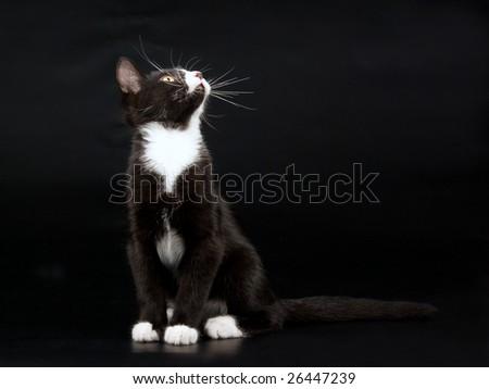 Kittens, black & white short