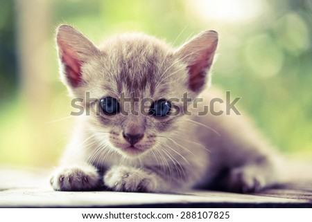 Pretty cat kitten on nature background - vintage effect