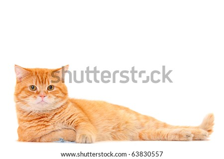 Pretty cat lying isolated on white