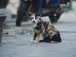 Pretty cat sitting at road.