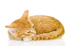 Pretty cat sleep. isolated on white background