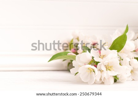 Pretty Crab Apple Blossoms in lower corner on Rustic Painted White Board Slats Background with empty blank room or space for copy, text, your words.  Horizontal frame, high key.
