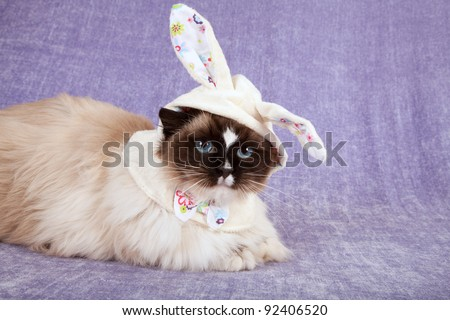 Pretty cute cat wearing cute easter bunny hat