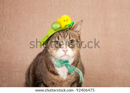 Pretty cute cat wearing easter hat
