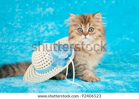 Pretty cute cat with white and blue pretty hat