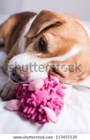 Pretty Dog playing with a funny pink toy