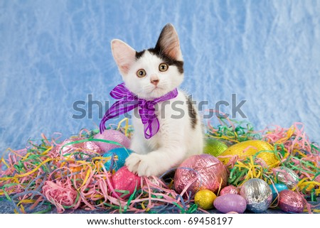 Pretty Easter kitten with eggs and colorful straw on blue background
