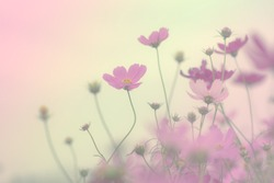 Pretty flower background and soft focus