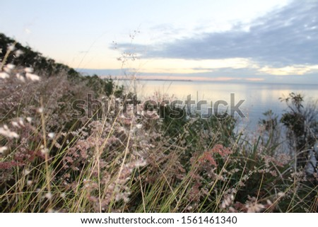 Pretty flowers and pretty views watching the sunrise over the water