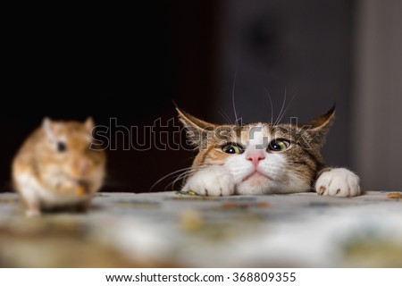Pretty ginger cat playing with little gerbil mouse on the table. Bestseller of cats&mices