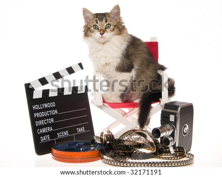 Pretty kitten on director chair with movie props, on white background ...