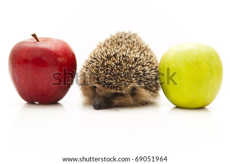 Pretty little hedgehog sitting on a white background and eating fruit.