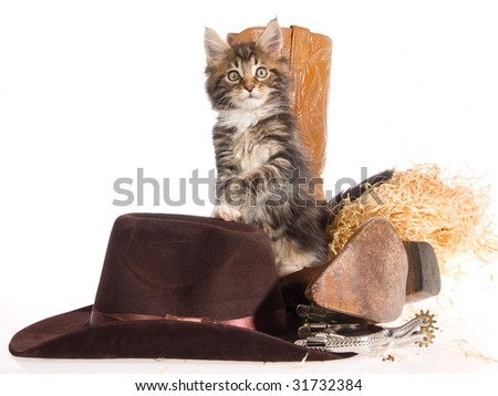 Pretty Maine Coon kitten with cowboy hat, boots, spurs and straw on white background