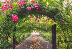 Pretty Path Through a Rose Arbor Tunnel with Pink Roses