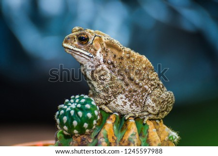 pretty picture toad on cactus
