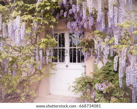 Pretty Pillnitz\nThere's always a magical feeling with Wisteria