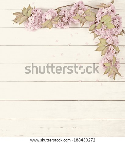 Pretty Pink Cherry Blossom Limbs on Rustic White Board Background with room or space for copy, text.  Vertical that can be horizontal with crop.  Faded old photo treatment.