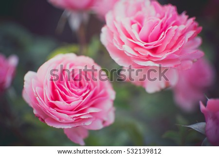 pretty pink flowers #532139812