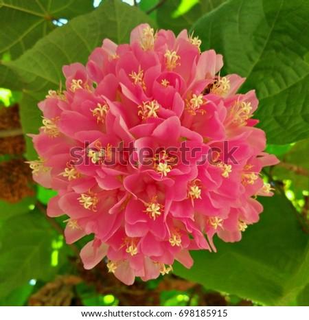 Pretty pink wildflower #698185915