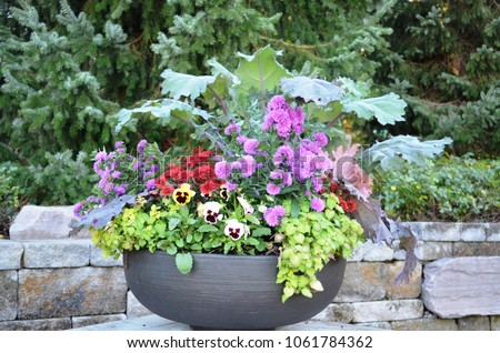 Pretty potted flowers in a kettle style planter #1061784362