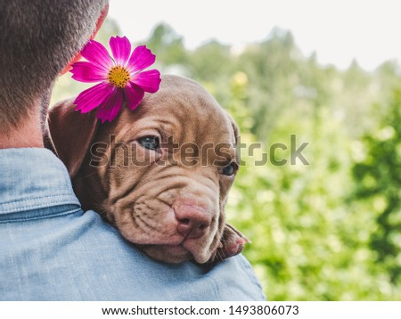 Pretty puppy of chocolate color and his caring owner on a background of blue sky, green trees on a clear, sunny day. Close-up, outdoor. Concept of care, education, obedience training, raising of pets