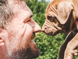Pretty puppy of chocolate color and his caring owner on a background of green trees on a clear, sunny day. Close-up, outdoor. Concept of care, education, obedience training, raising of pets