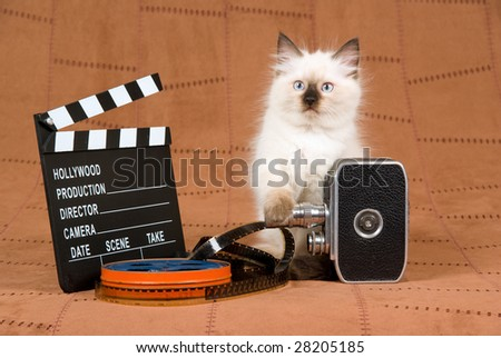 Pretty Ragdoll kitten with vintage film camera, reel of film and clapperboard on brown suede background