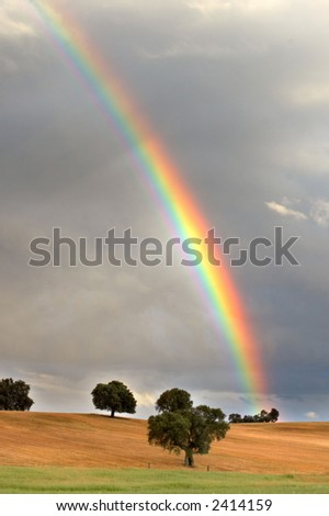 pretty rainbow in a field with trees