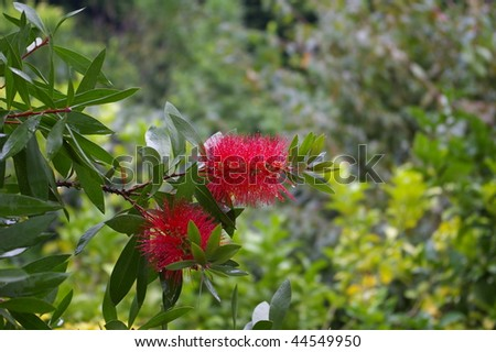 Pretty red flowers in a green background - stock photo