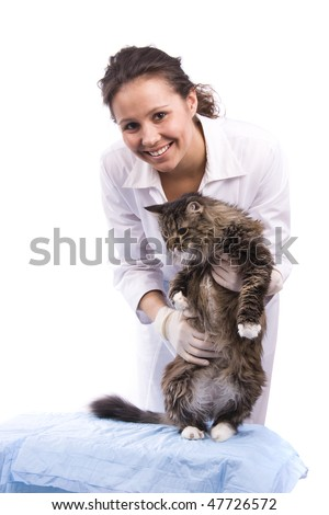 Pretty vet and feline subject.  Veterinarian have a  medical examination a cat. White background.
