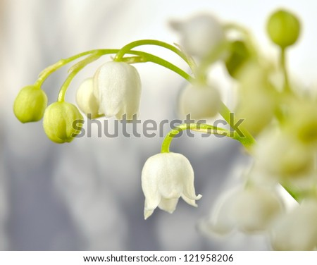pretty white bells with a sprig of lily