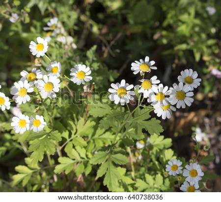 Royalty Free Pretty Small White Flowers Of 376251196 Stock Photo