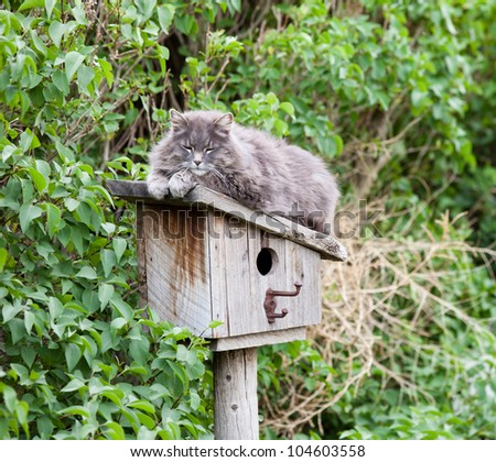 Pretty Wild Cat sleeping on a Bird House.